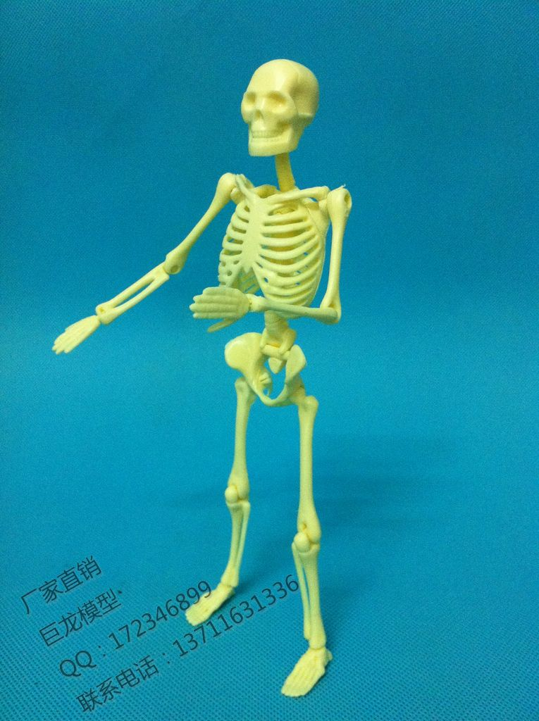 Mini Human Skeleton Educational Model 20cm Bulimic Mannequin , Educational Toys Model Skeleton Model Free Shipping