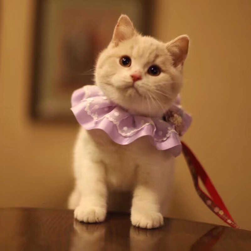 ペット犬弓ネクタイ首輪手作り犬ネックレスファッションフラワーインテリア小型犬猫アクセサリー高貴なレースのペット用品