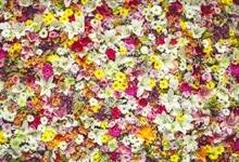 Laeacco Blooming Flower Parede Photo Backgrounds Personalizados Fotografia Backdrops Para Estúdio de Fotografia