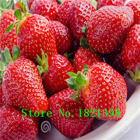 500 Seeds / Pack, Super Giant Strawberry Fruit Seed Apple Sized 100% True Variety NOT fake free shipping