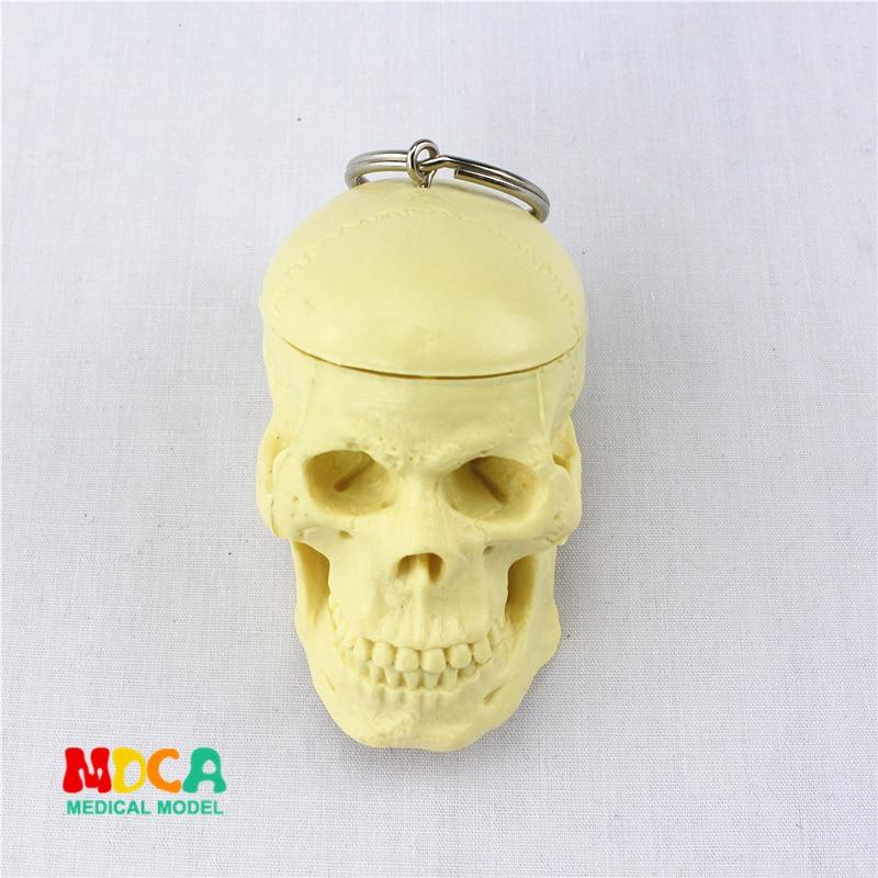 Human.skull Key Buckle Ornament Gift Pendant Key Buckle Human.organ Anatomy Medical Teaching Toy YSK005