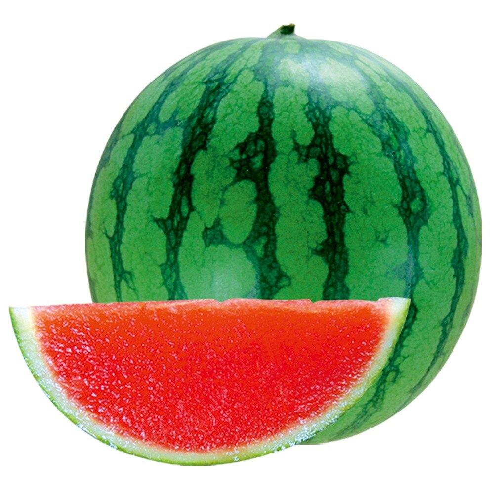 10 Seedless watermelon Seeds sweet& juice very tasty easy ...