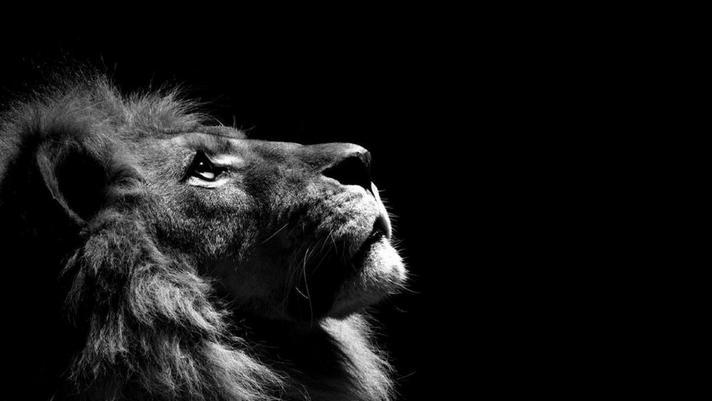 Poster do filme Lion