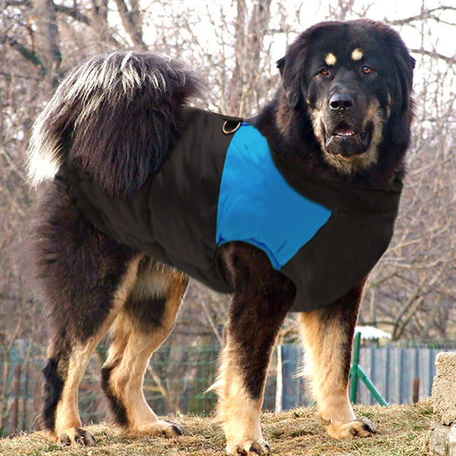 Large Dog Coat Ropa Perro  1