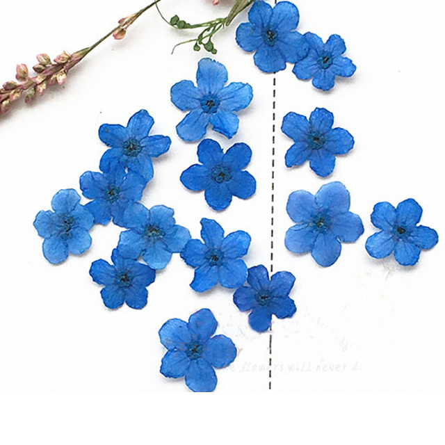 Pressed Wedding Flowers: Aliexpress.com : Buy Dye Blue Myosotis Pressed Flower