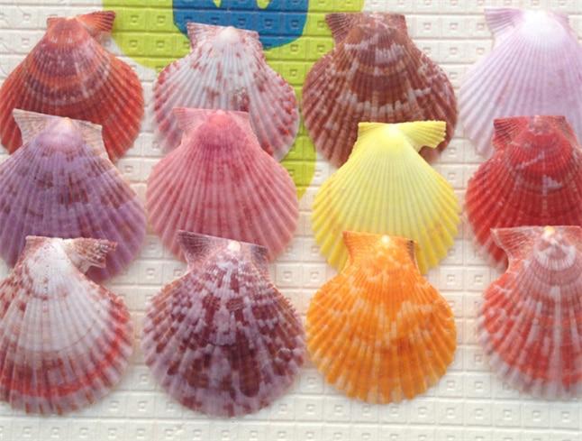 72pcs/lot Craft Colored Scallops Seashell 4-5cm/1pc Decorative Seashells Natural Decor Ornament Mediterranean Marine Style