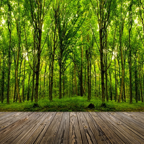 8x12ft Outdoor Green Trees Forest Woods Dark Wooden Plank