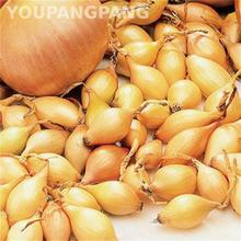 Hot Sale 200pcs Giant Onion Seeds Organic Vegetables Seed Diy Plant For Garden Bonsai Heirloom Tomato Garlic * Shallot Sementes