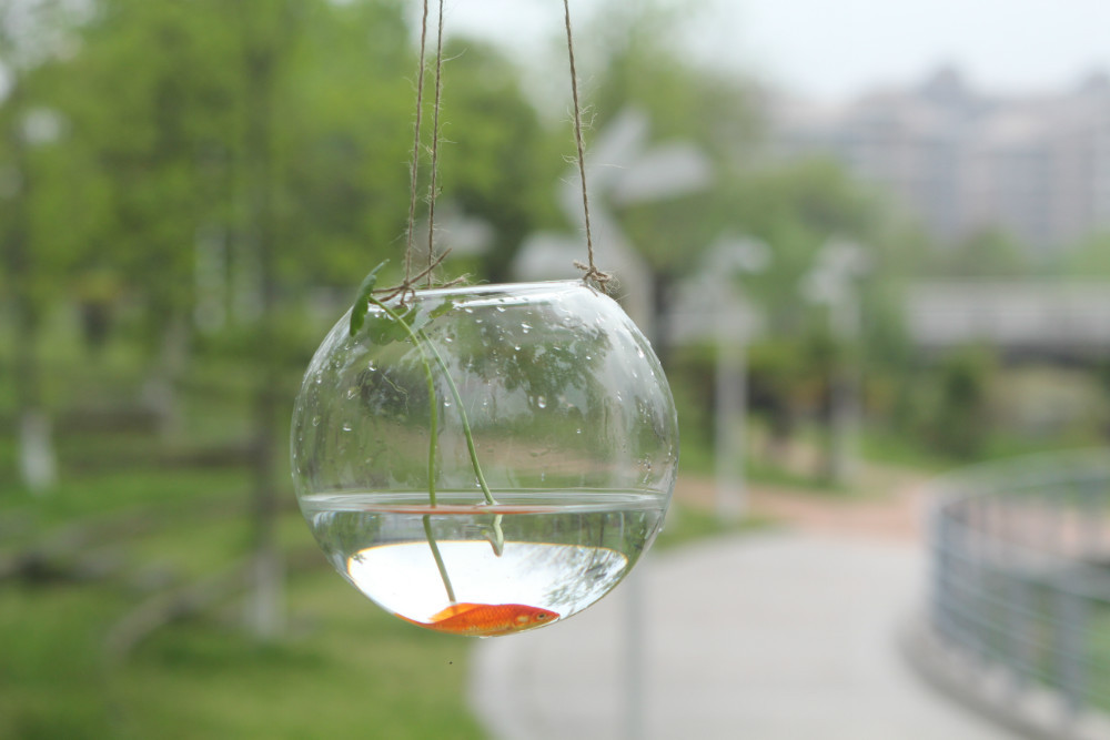 New Arrival ! crystal goldfish bowl hydroponics vase Hanging glass ball  decorative garden vase Dia10cm Opening 5.5cm-in Vases from Home & Garden on  ...