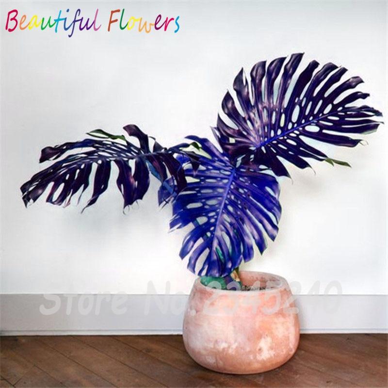 monstera pflanze kaufen billigmonstera pflanze partien aus china monstera pflanze lieferanten. Black Bedroom Furniture Sets. Home Design Ideas