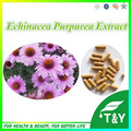 Pure Saúde Natural Echinacea Purpurea Extract10: 1 Cápsula 500 mg * 200 pcs