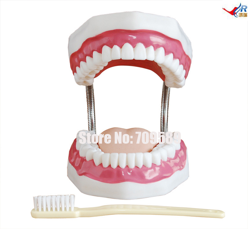 Dental Care Model (32 Teeth) pro teeth whitening oral irrigator electric teeth cleaning machine irrigador dental water flosser teeth care tools m2