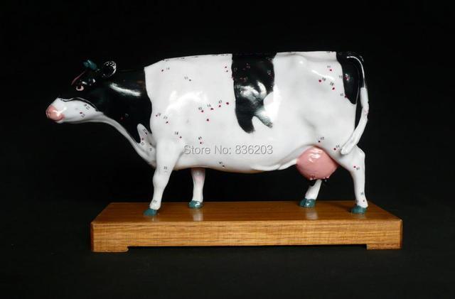 Veterinario vaca ganado bovino acupuntura modelo en trauma anatomía ...