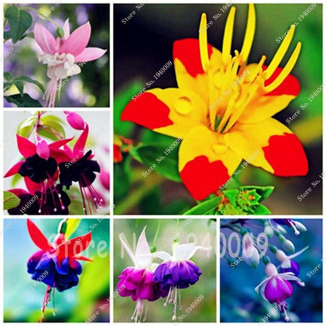 150 pz Lanterna Fiori Bonsai, Per Il Giardino di Casa, Fucsie Piantina, Fiori In
