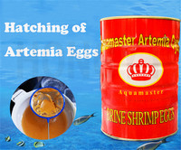 1 piece granules 425g artemia shrimp eggs fish and shrimp feed high hatching rate big red eggs can hatch seedlings