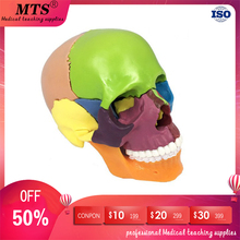 Detachable Human colour skull model 15 parts head skeleton anatomical model for medical teaching art sculpture and dental model skull 4d master puzzle assembling toy human body organ anatomical model medical teaching model
