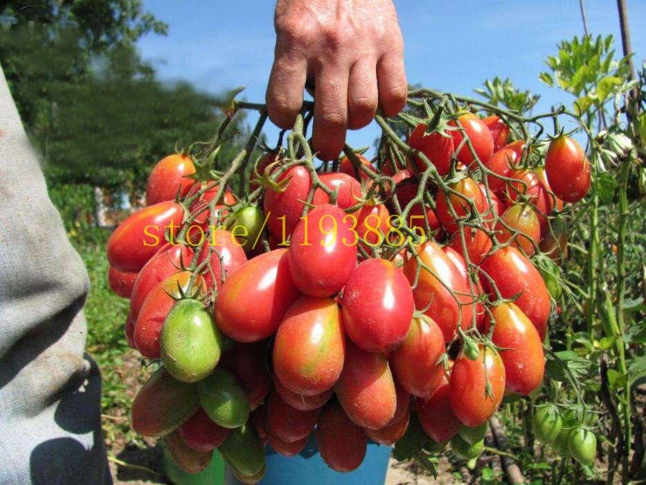 Acquista all 39 ingrosso online semi di ortaggi rari da for Piantare pomodori