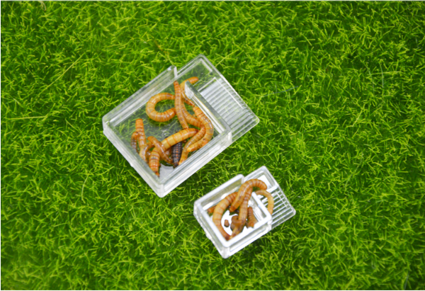 Ant Farm Food Feeder,food Feeding Area For Ant Nest ,ant Farm Acryl Or Insect Nests Villa Pet Mania For House Ants