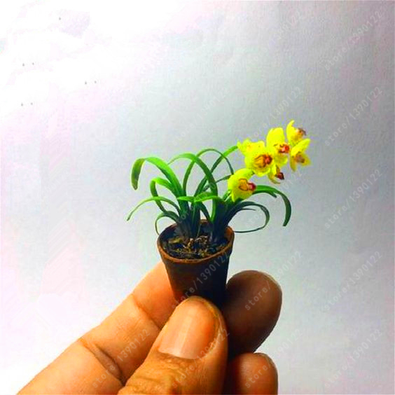 100 Pcs/bag rare Mini Orchid Seeds phalaenopsis orchid Indoor Miniature garden bonsai flower seeds orchid Pot home garden plant