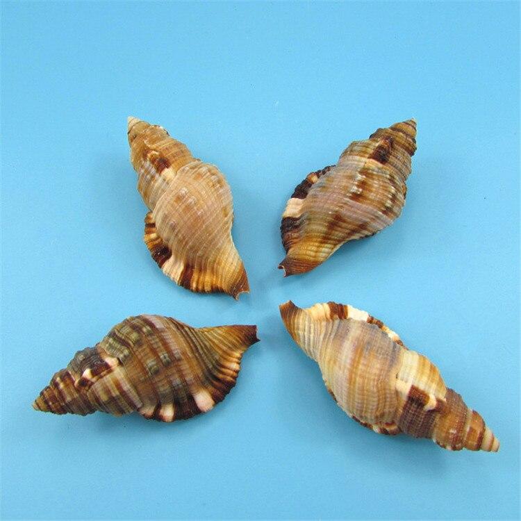 10pcs natural conch shell dharma horn snail aquarium. Black Bedroom Furniture Sets. Home Design Ideas
