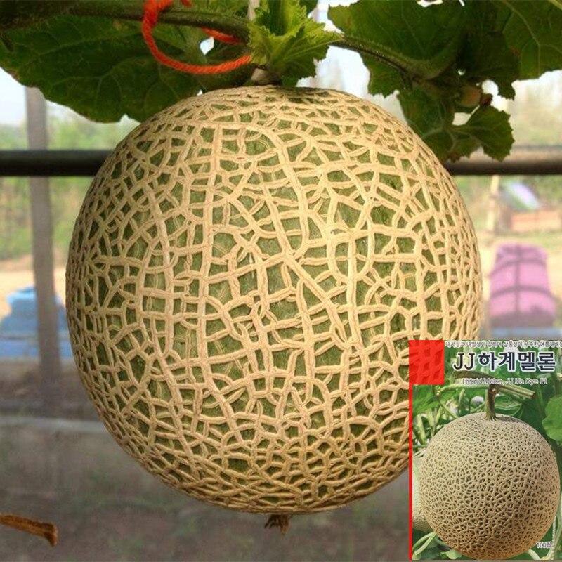 1 Original package 10G around 350 seeds Korea JJ Ha Gye F1 Summer Hybrid Sweet Melon Seeds Very sweet Hami Melon fruit Seeds