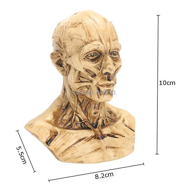 13 10cm Human Head Anatomy Skull Mask Replica Resin Model Skull