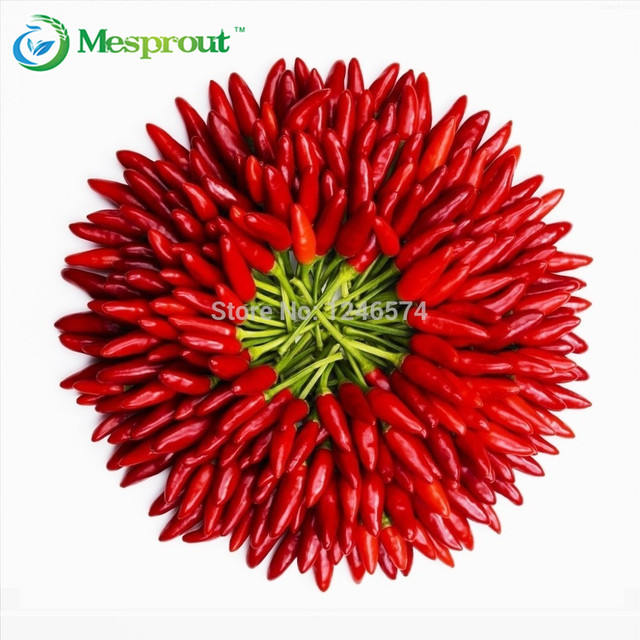 Pepper Seed / 50PCS Seeds Capsicum Frutescens Dry Red Pepper Dried Chilli Seeds