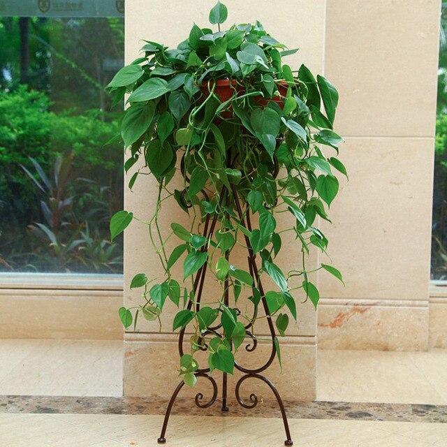 Ou Wrought Iron Flower Floor A Few Indoor Single Money Plant