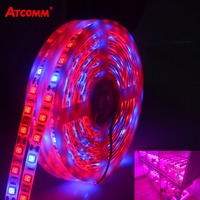 LED Phyto Lamp Strip Light SMD 5050 5 Meters Full Spectrum Grow Lights DC 12V Fitolampy