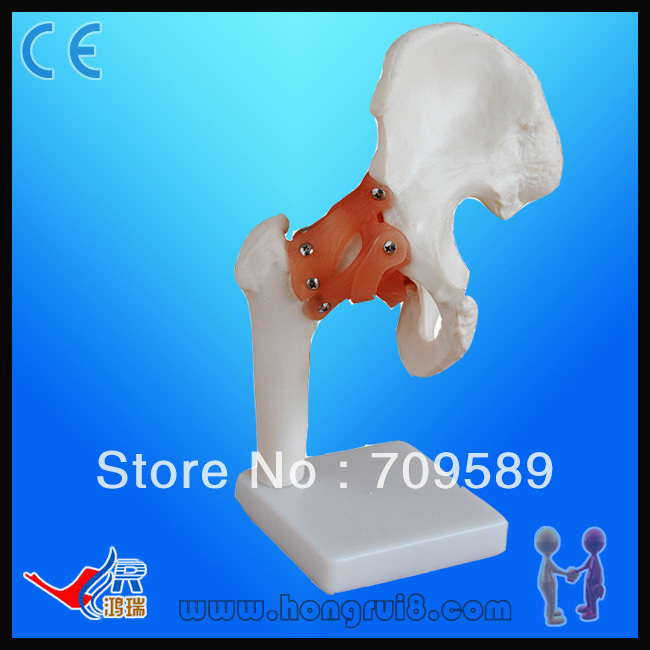Life Size Human Hip Joint Model plastic standing human skeleton life size for horror hunted house halloween decoration