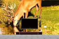 3D Wallpaper Custom Photo Wall Paper Elk Stream Of Water TV Sofa Bedding KTV Hotel Living