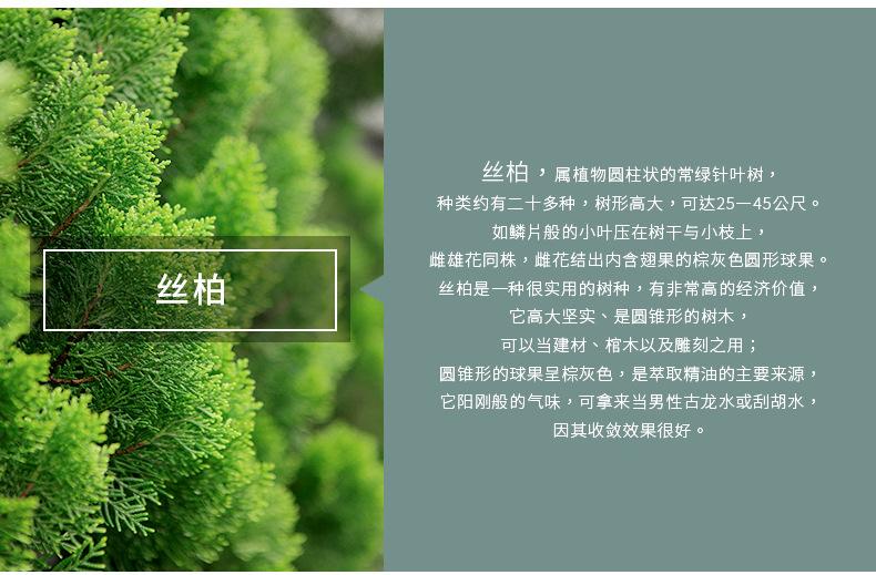 丝柏产品信息.jpg
