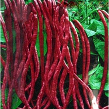 Bean plant garden red seeds home outdoor shipping free for