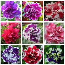 100 шт./пакет висячие семена петунии балкон горшках косой петуния семена петуния многоцветный растений для дома сад