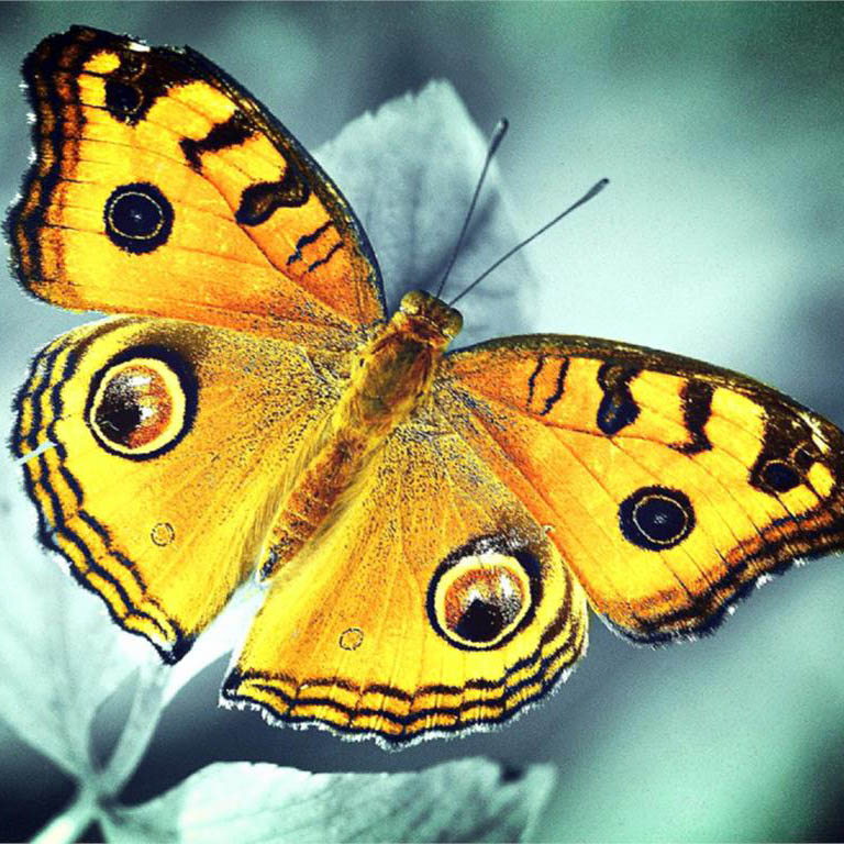 Butterfly-flowers-nimal-new-arrival-DIY-Crystal-full-drill-square-5D-diamond-painting-cross-stitch-kit (5)