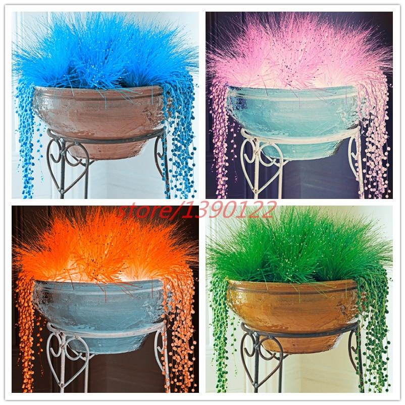 200 azury pçs/saco Decorativos sementes de grama verde azul vermelho rosa roxo 6 cor bonsai grama sementes de plantas em vasos para casa & jardim