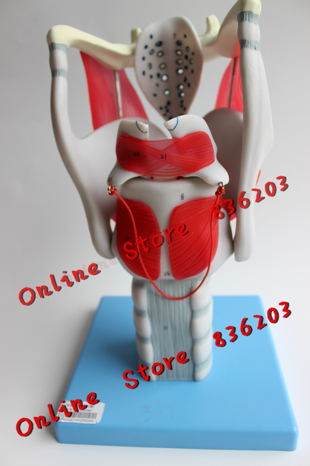 Buy Anatomy Functions And Get Free Shipping On Aliexpress