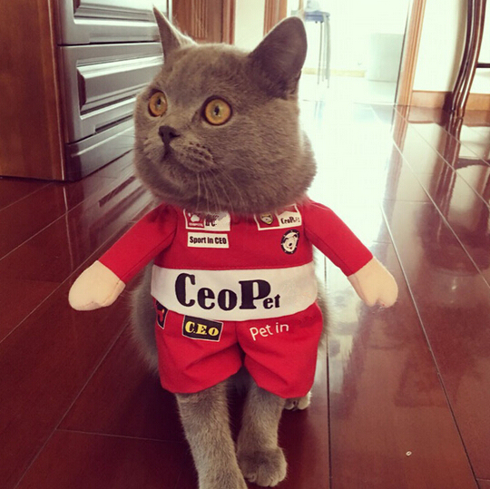 funny halloween clothes f1 red racer and boxer small pet cat costume dog cat coat and hat for dogs puppy clothesin cat clothing from home u0026 garden on