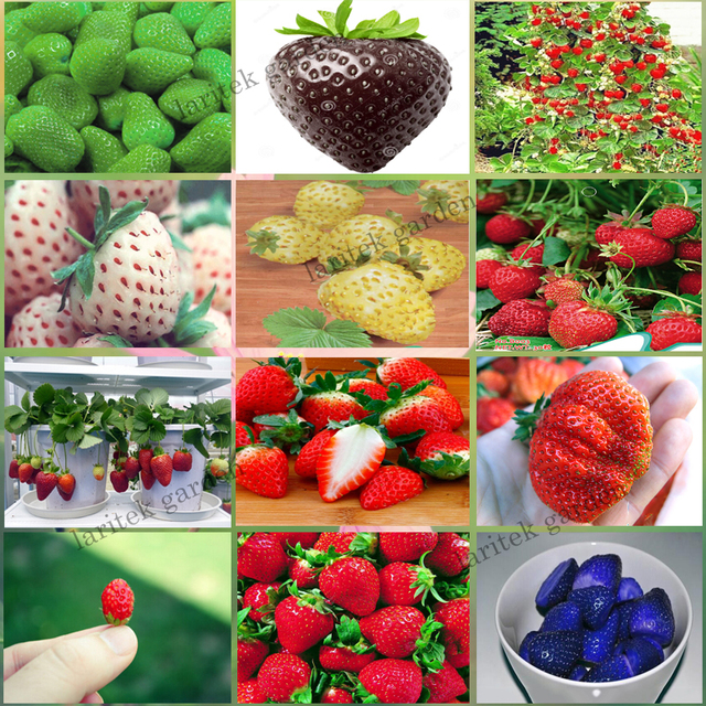12 Packs Different Strawberry Seeds (Green, White, Black, Red, Blue, Giant, Mini, Bonsai, Normal Red, Pineberry) E3508