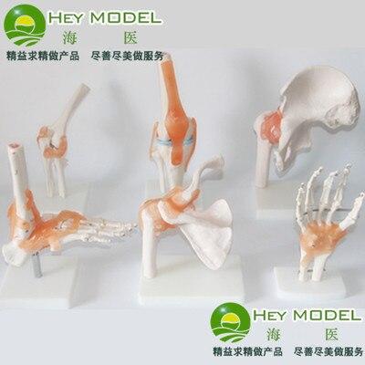 Mano conjunta articulación de la cadera codo rodilla articulación ...