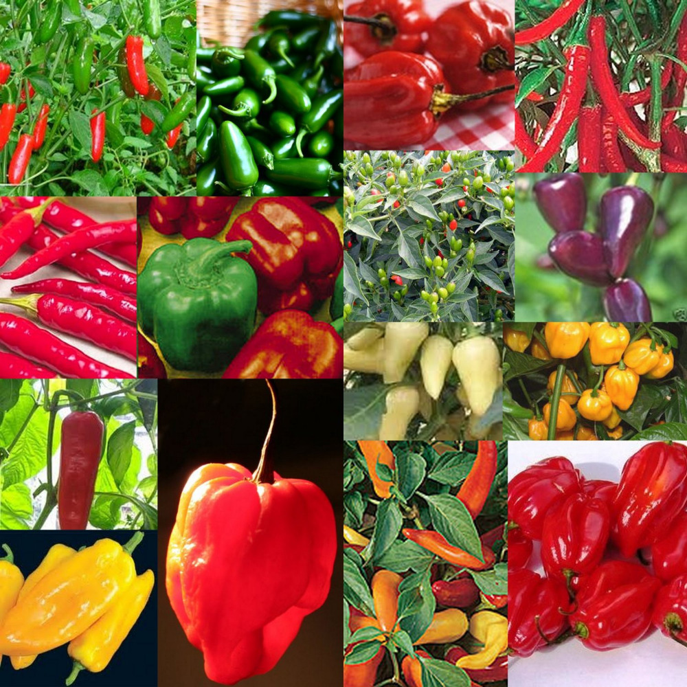 семена овощей и цветов фото означает, что сорт