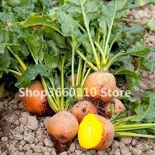 50 Pcs Beet Bonsai Beetroot Vegetable Ruby Queen Heirloom Organic Plant Home Garden Flower