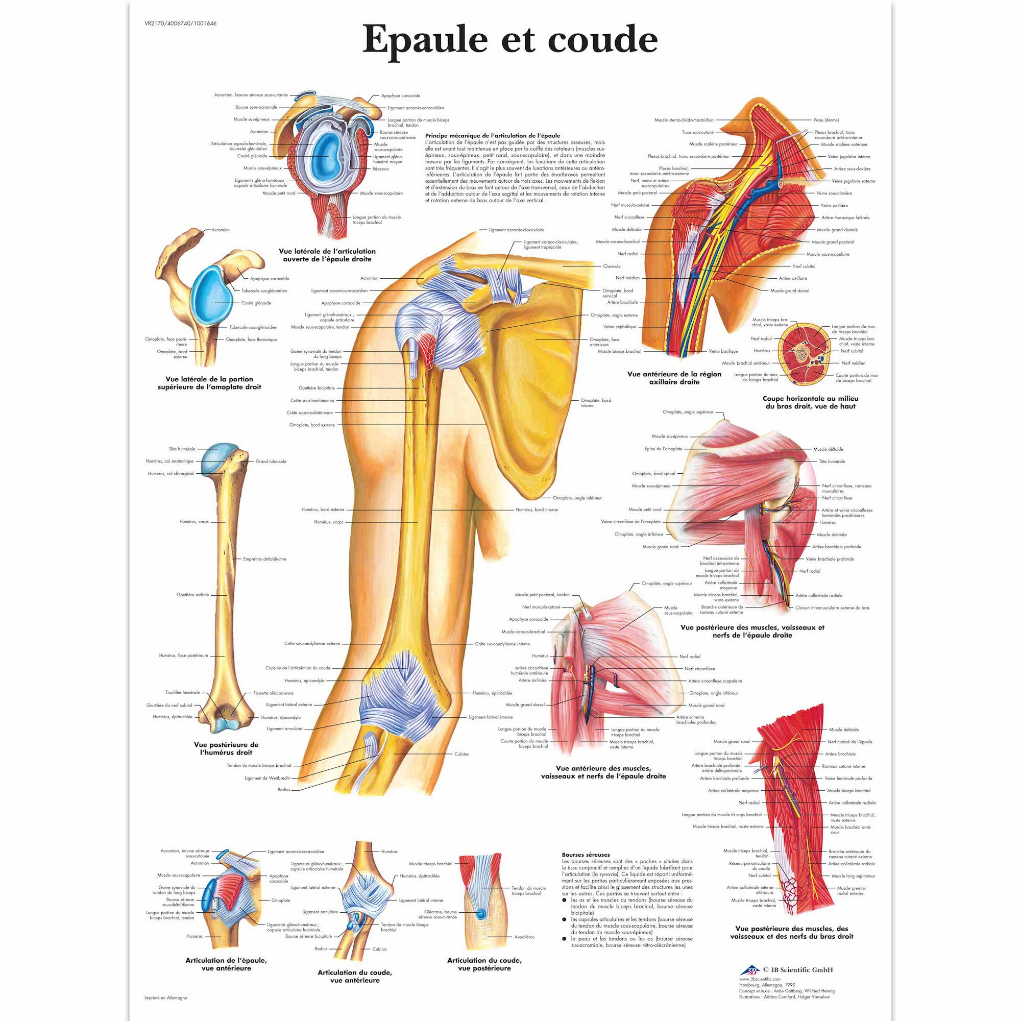 Medical Anatomy Anatomical Poster Allergies Chart Classic Canvas ...