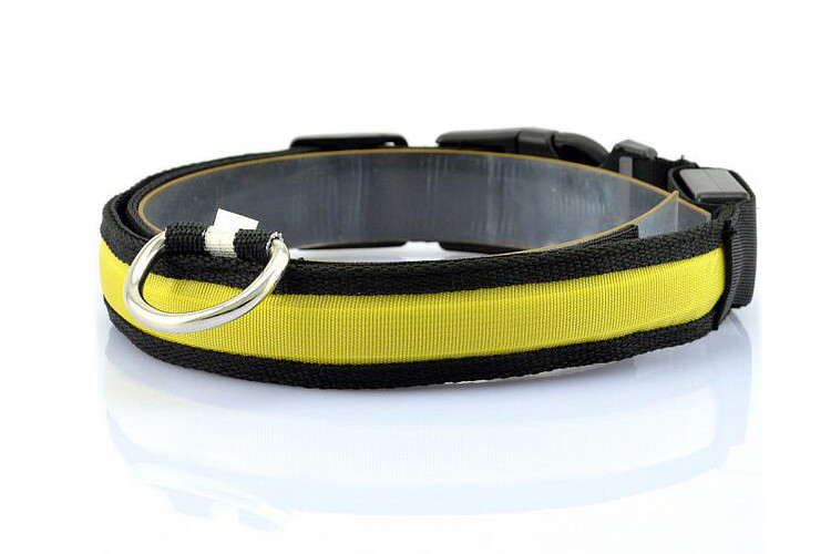 collier chien lumineux clignotant