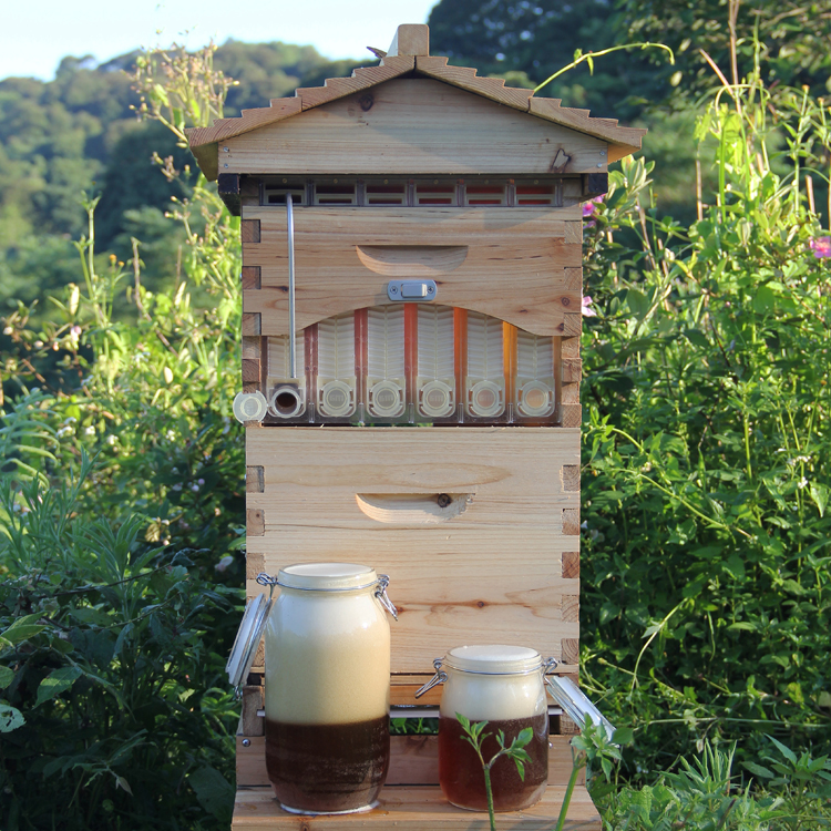 My Hive Home >> Free Shipping Smart Flow Hive Automatic Honey Collection 6PCS Comb Beehive Automatic Honey Tap ...