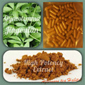 Gynostemma Pentaphyllum - Jiaogulan - 20:1 extract Capsules  TOP ADAPTOGEN - 400mg 100 Capsules