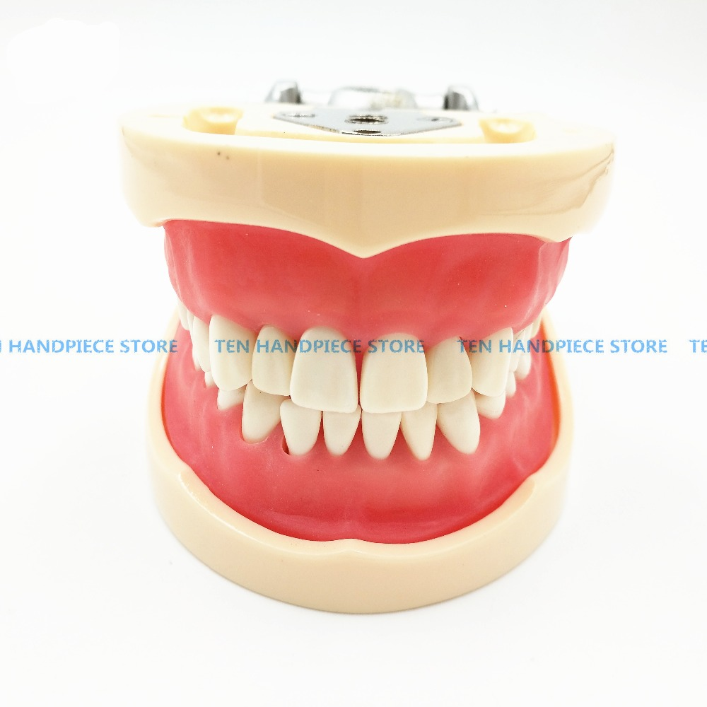 2018 good quality Teeth Teaching Model Dental Soft gingiva 200H Type Removable Teeth dentist student learning model free shipping good quality dental soft gum teeth model with tougnetypodont w 32 removable teeth nissin 200 compatible