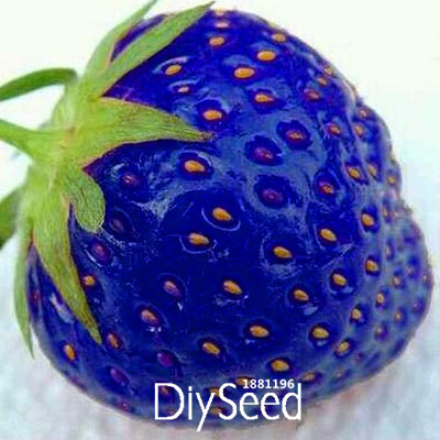 new arrival 50 pcs lot blue rare fruits and vegetables strawberry