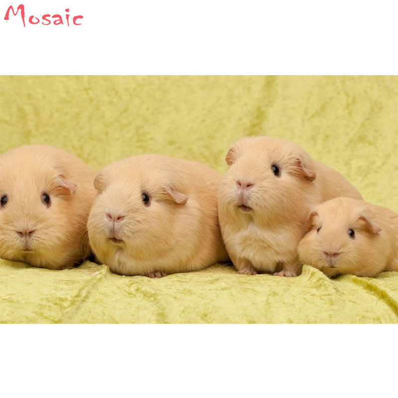 Animal Diy Diamond Painting Cross Stitch Guinea Pig Four Baby