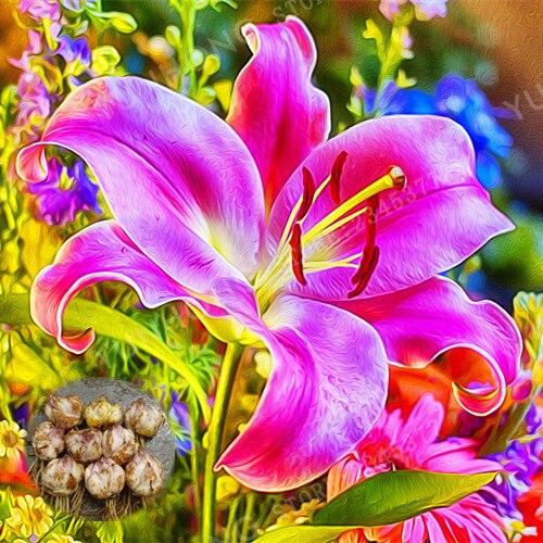 2 Pcs / Bag Rare Pink Lily Bulb Bonsai It Is Bulb Bonsai Lily Bulb Pleasant Fragrance Home And Garden Plants